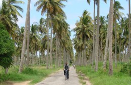 cycling in the cocunut trees