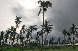 mozambique lodge palms