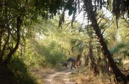 elephants_at_gorongosa_L